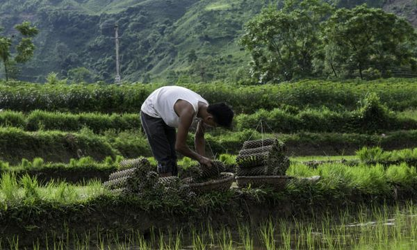 Vietnam can reduce emissions, save $2.3 billion by 2030 in ag, forestry and land use